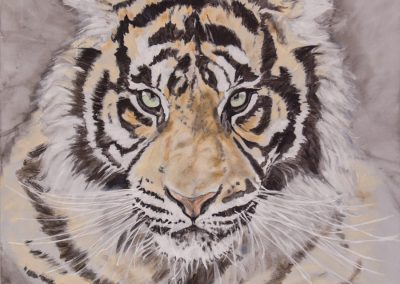 Portrait Tiger